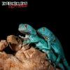 Baby Blue Axanthic Iguana