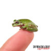 Baby Snowflake Australian Dumpy Tree Frog