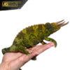 Jumbo Jackson's Chameleon