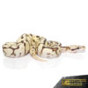 Baby Bumblebee Fire Scaleless Head Ball Python (Female)