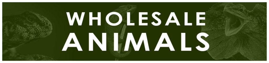 Wholesale Reptiles & Exotic Animals - UGR Wholesale