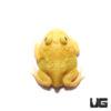 Super Pikachu Pacman Frog